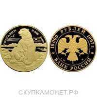 10000 рублей 1997 год (золото, Полярный медведь), фото 1